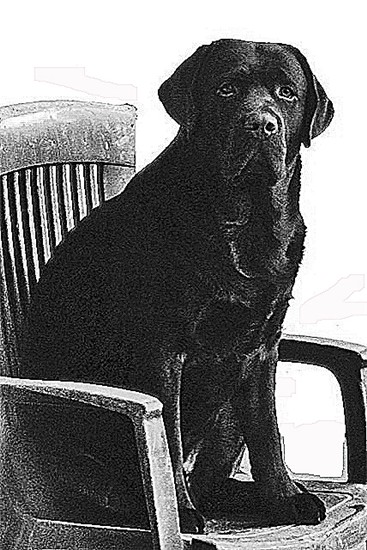 p1013379_chairdogbowditch