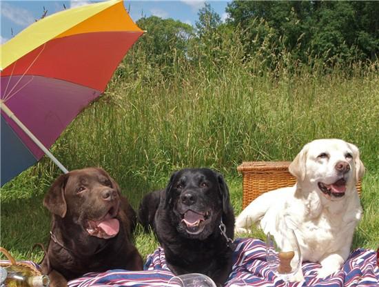 picnicdogs
